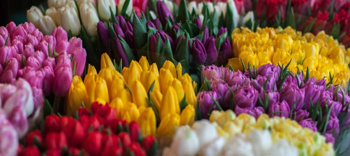 Spring is a wonderful time to enjoy shopping, dining, and the wonderful sights in Newtown, Bucks County PA